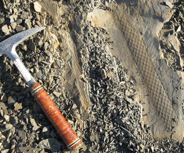 Fossiles du Dévonien supérieur de New South Wales